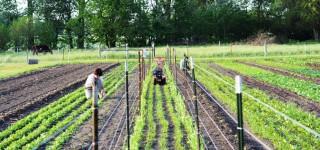 Epiphany Farms Hospitality Group